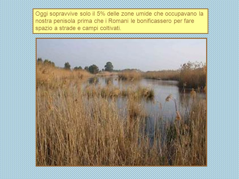 Oggi sopravvive solo il 5% delle zone umide che occupavano la nostra penisola prima che i Romani le bonificassero per fare spazio a strade e campi col