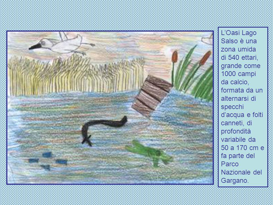 Le zone umide sono ambienti ricchi di vita.