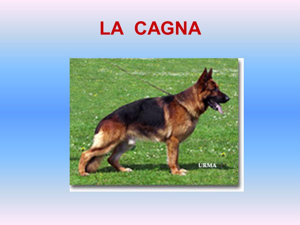 LA CAGNA