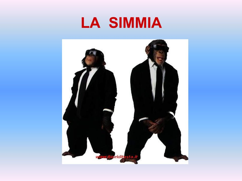 LA SIMMIA