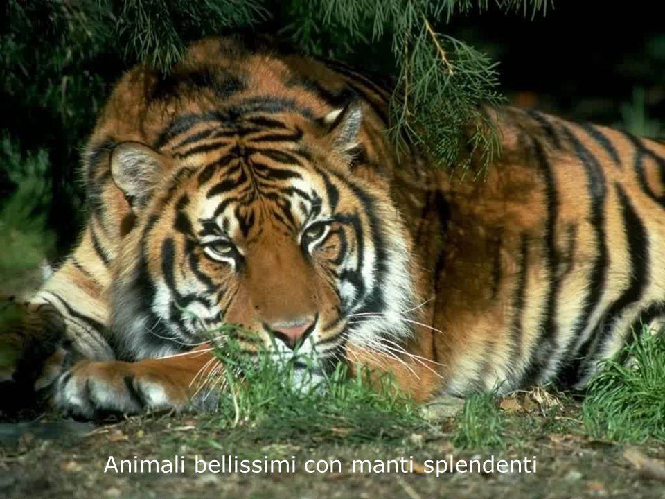 Animali Bellissimi