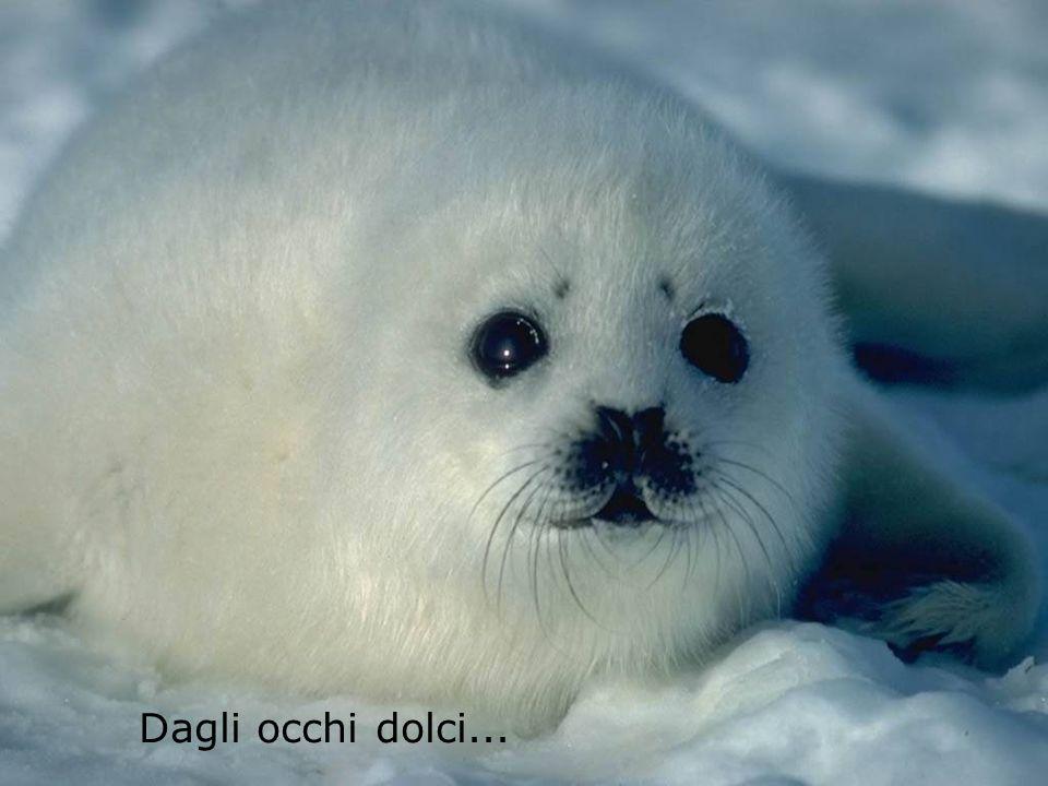 Animali bellissimi con manti splendenti