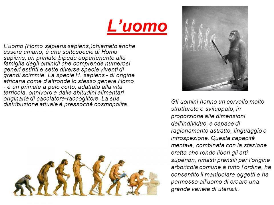 Luomo L'uomo (Homo sapiens sapiens,)chiamato anche essere umano, è una sottospecie di Homo sapiens, un primate bipede appartenente alla famiglia degli