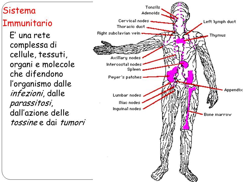 Sistema Immunitario E una rete complessa di cellule, tessuti, organi e molecole che difendono lorganismo dalle infezioni, dalle parassitosi, dallazion