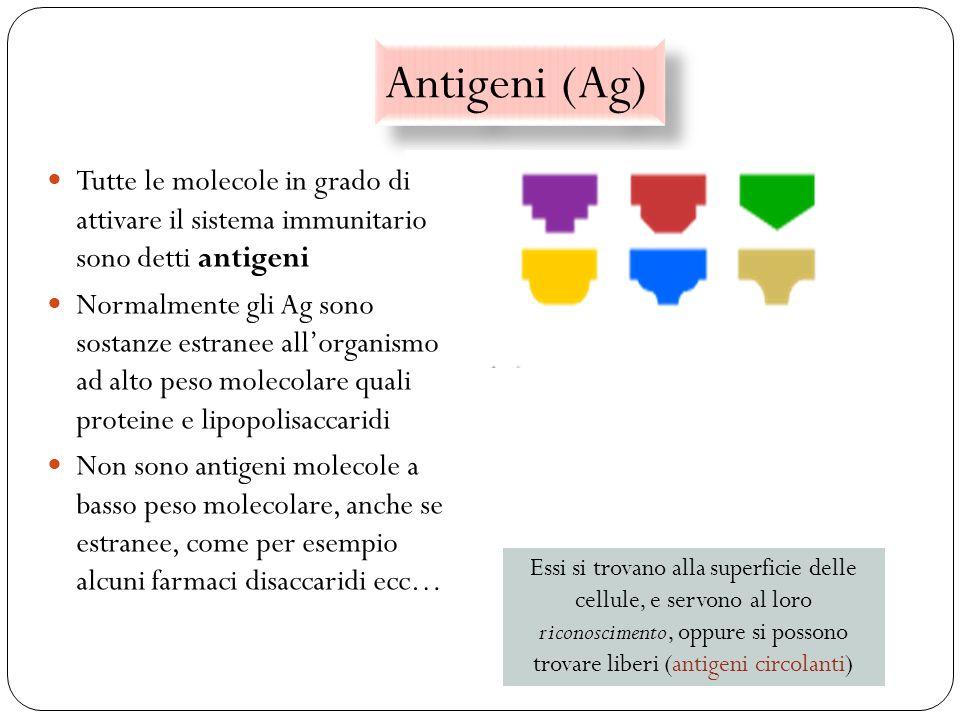 Antigeni (Ag) 25 Tutte le molecole in grado di attivare il sistema immunitario sono detti antigeni Normalmente gli Ag sono sostanze estranee allorgani