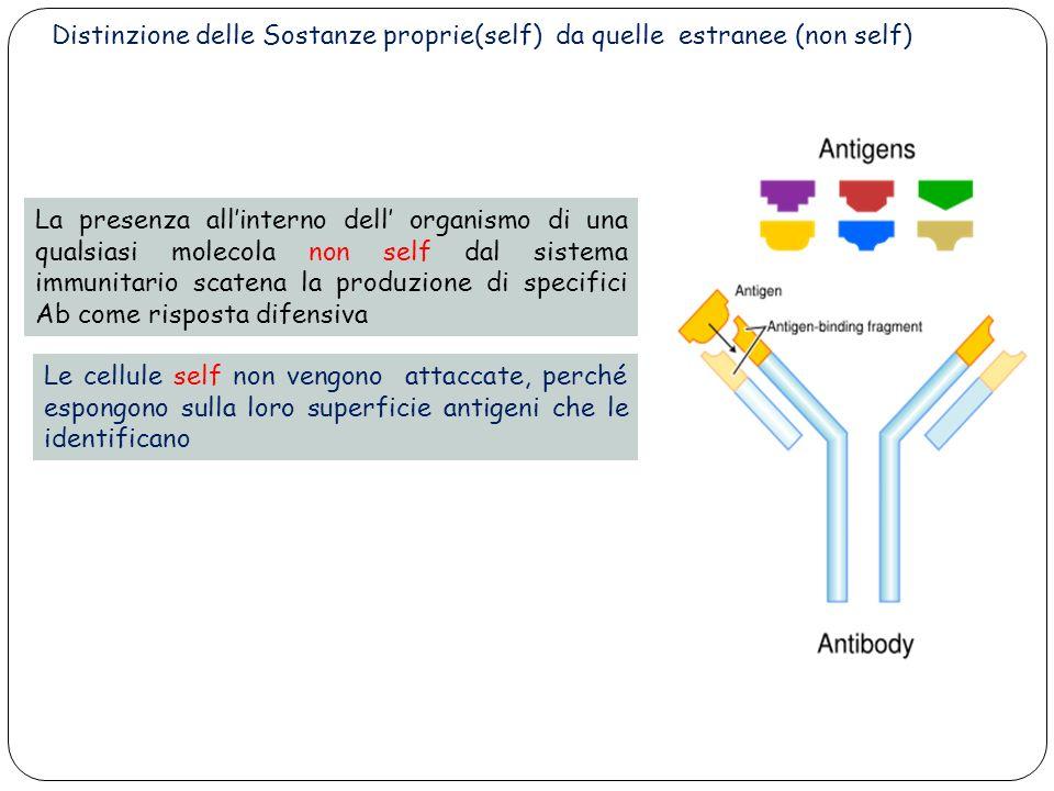 28 Le cellule self non vengono attaccate, perché espongono sulla loro superficie antigeni che le identificano La presenza allinterno dell organismo di una qualsiasi molecola non self dal sistema immunitario scatena la produzione di specifici Ab come risposta difensiva Distinzione delle Sostanze proprie(self) da quelle estranee (non self)