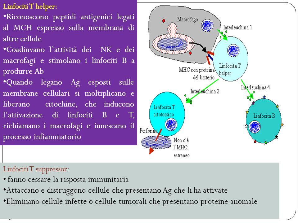 sistema immunitario 34 Linfociti T helper: Riconoscono peptidi antigenici legati al MCH espresso sulla membrana di altre cellule Coadiuvano lattività dei NK e dei macrofagi e stimolano i linfociti B a produrre Ab Quando legano Ag esposti sulle membrane cellulari si moltiplicano e liberano citochine, che inducono lattivazione di linfociti B e T, richiamano i macrofagi e innescano il processo infiammatorio Linfociti T suppressor: fanno cessare la risposta immunitaria Attaccano e distruggono cellule che presentano Ag che li ha attivate Eliminano cellule infette o cellule tumorali che presentano proteine anomale