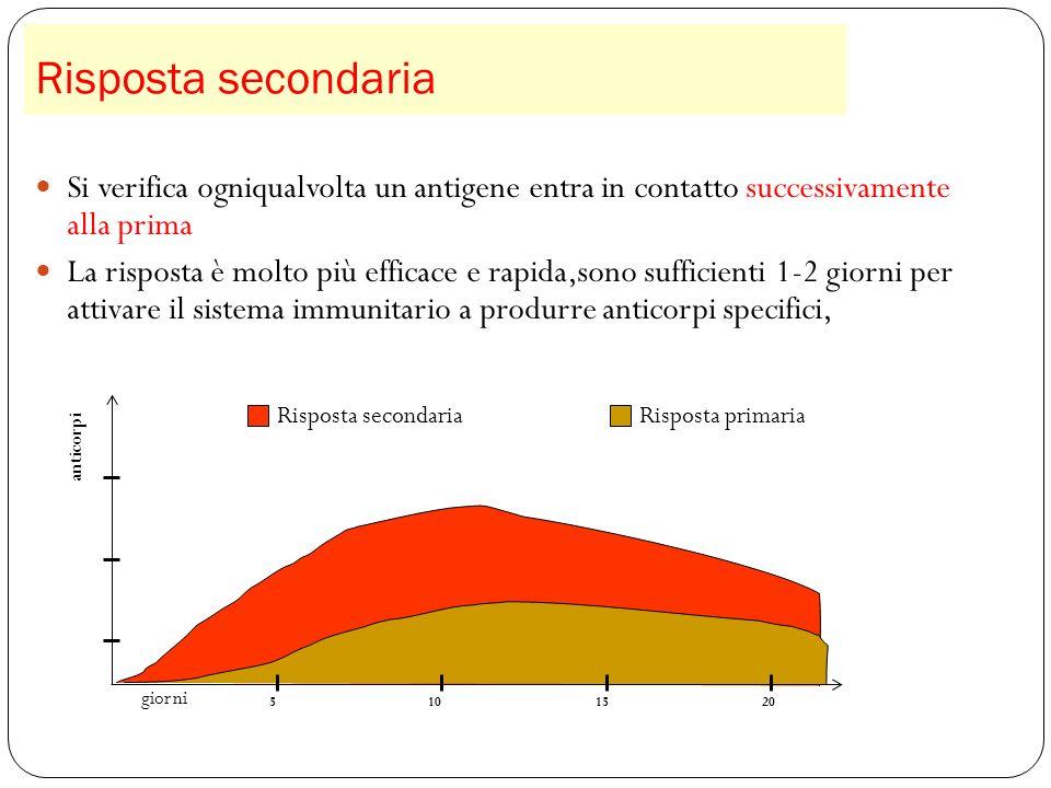 Risposta secondaria 36 Si verifica ogniqualvolta un antigene entra in contatto successivamente alla prima La risposta è molto più efficace e rapida,so