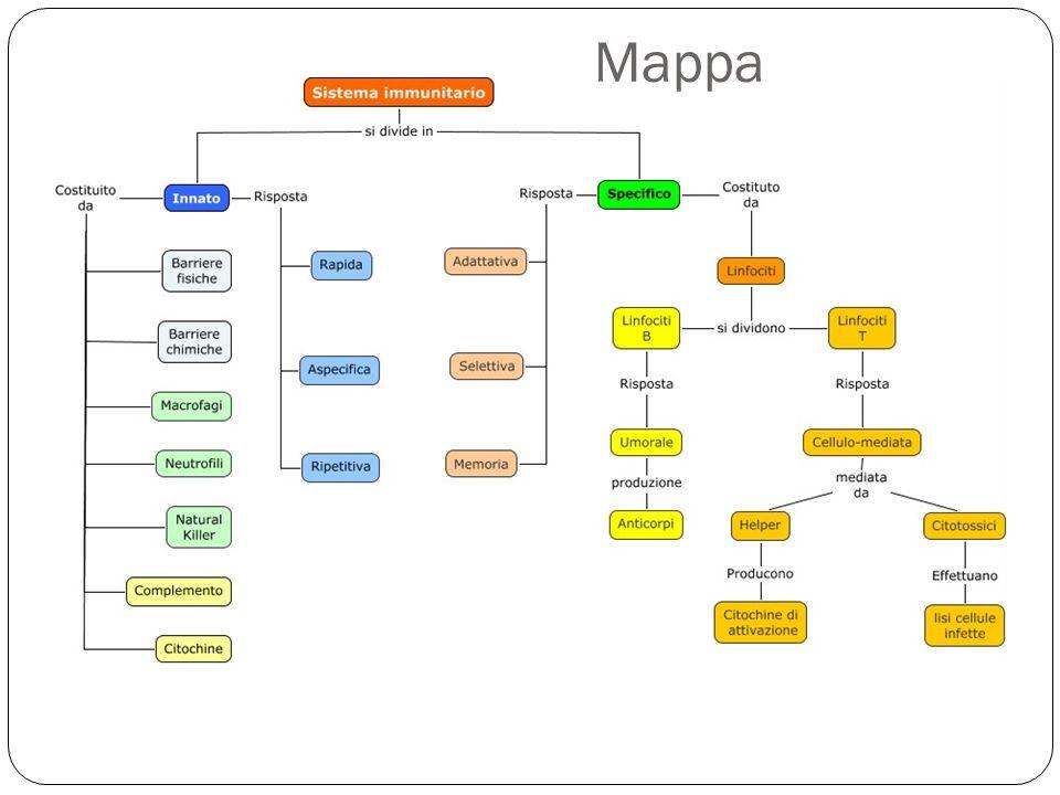 38 Mappa