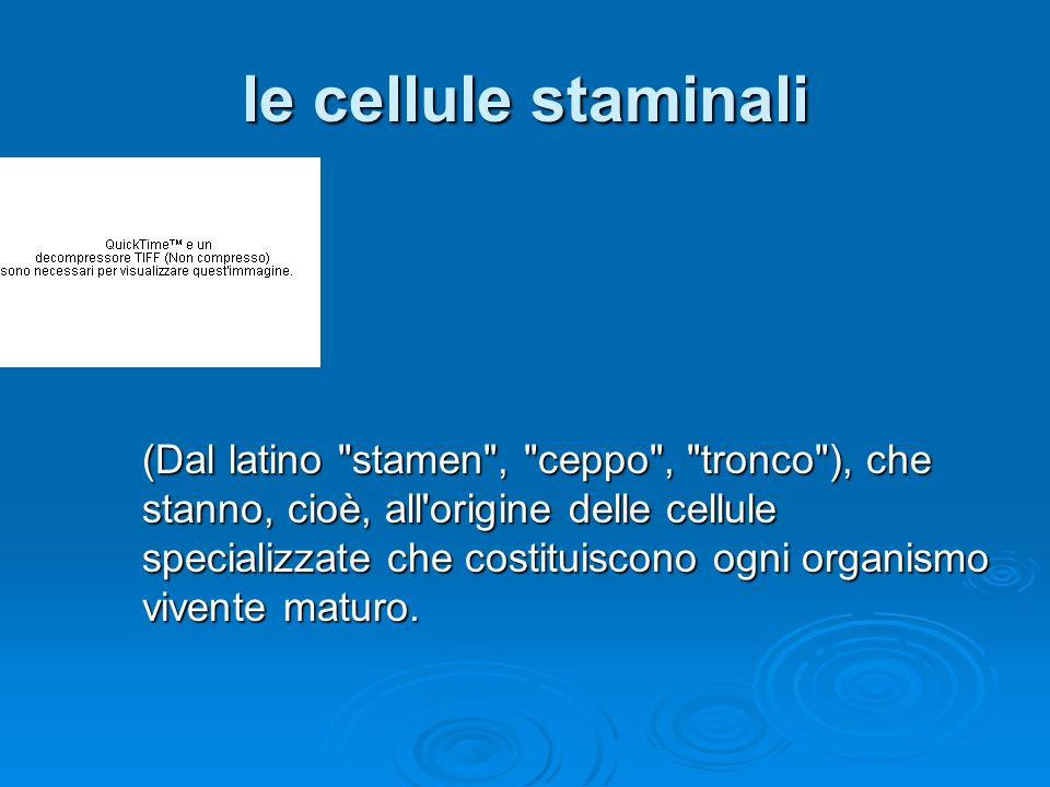 le cellule staminali (Dal latino stamen , ceppo , tronco ), che stanno, cioè, all origine delle cellule specializzate che costituiscono ogni organismo vivente maturo.