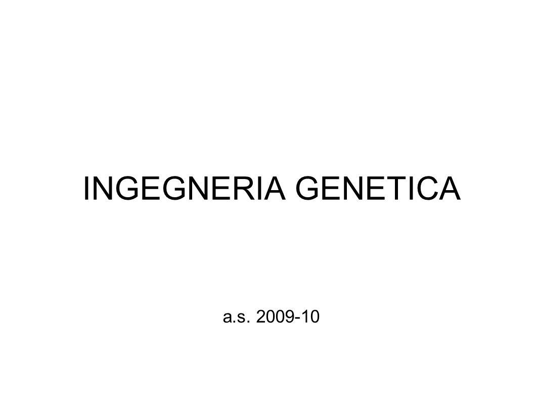 Nascita e sviluppo dell ingegneria genetica 1928 Dimostrazione che il DNA può trasformare geneticamente (Griffith) 1944 Si dimostra che l informazione genetica è contenuta nel DNA (Avery) 1953 Si pubblica la struttura del DNA (Watson e Crick) 1966 Decifrazione del codice genetico 1970 Isolamento dei primi enzimi di restrizione 1972 Sintesi chimica di un gene (Khorana) 1973 Primi clonaggi in batteri (Boyer e Cohen) 1976 Conferenza di Asilomar sulle ricadute tecniche del DNA ricombinante 1976 Metodo di sequenziamento del DNA (Maxam e GiIbert) 1978 Si commercializza la prima insulina umana 1980 Si brevettano in USA i primi organismi ricombinanti 1983 Si ottengono le prime piante transgeniche 1988 Viene pubblicato il metodo della PCR (Mullis) 1990 Si inizia la sperimentazione sull uomo della terapia genica 1996 Viene completata la prima sequenza di un gene eucariotico 1997 Viene clonata una pecora (Dolly) da un nucleo di cellula differenziata 2001 Viene pubblicata la sequenza del genoma umano