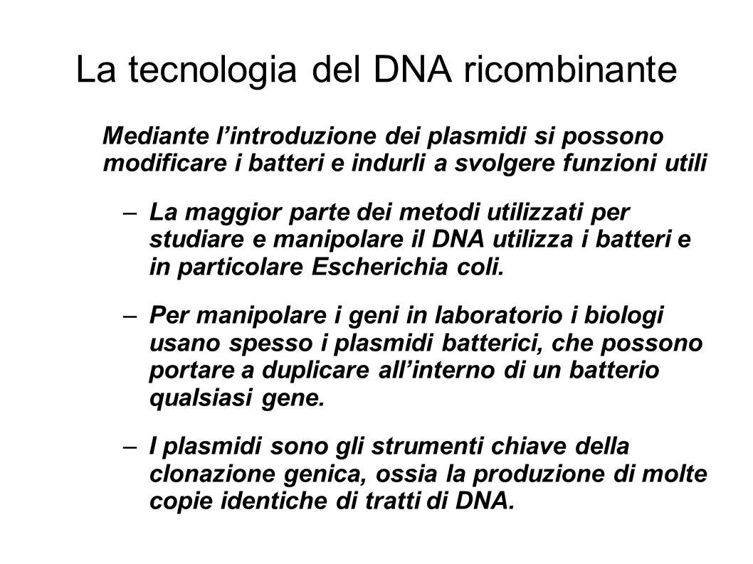 La tecnologia del DNA ricombinante Mediante lintroduzione dei plasmidi si possono modificare i batteri e indurli a svolgere funzioni utili –La maggior parte dei metodi utilizzati per studiare e manipolare il DNA utilizza i batteri e in particolare Escherichia coli.