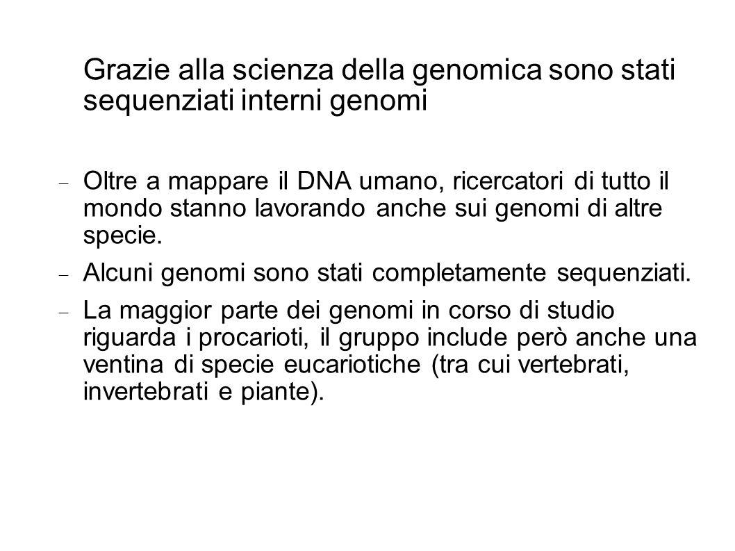 Grazie alla scienza della genomica sono stati sequenziati interni genomi Oltre a mappare il DNA umano, ricercatori di tutto il mondo stanno lavorando