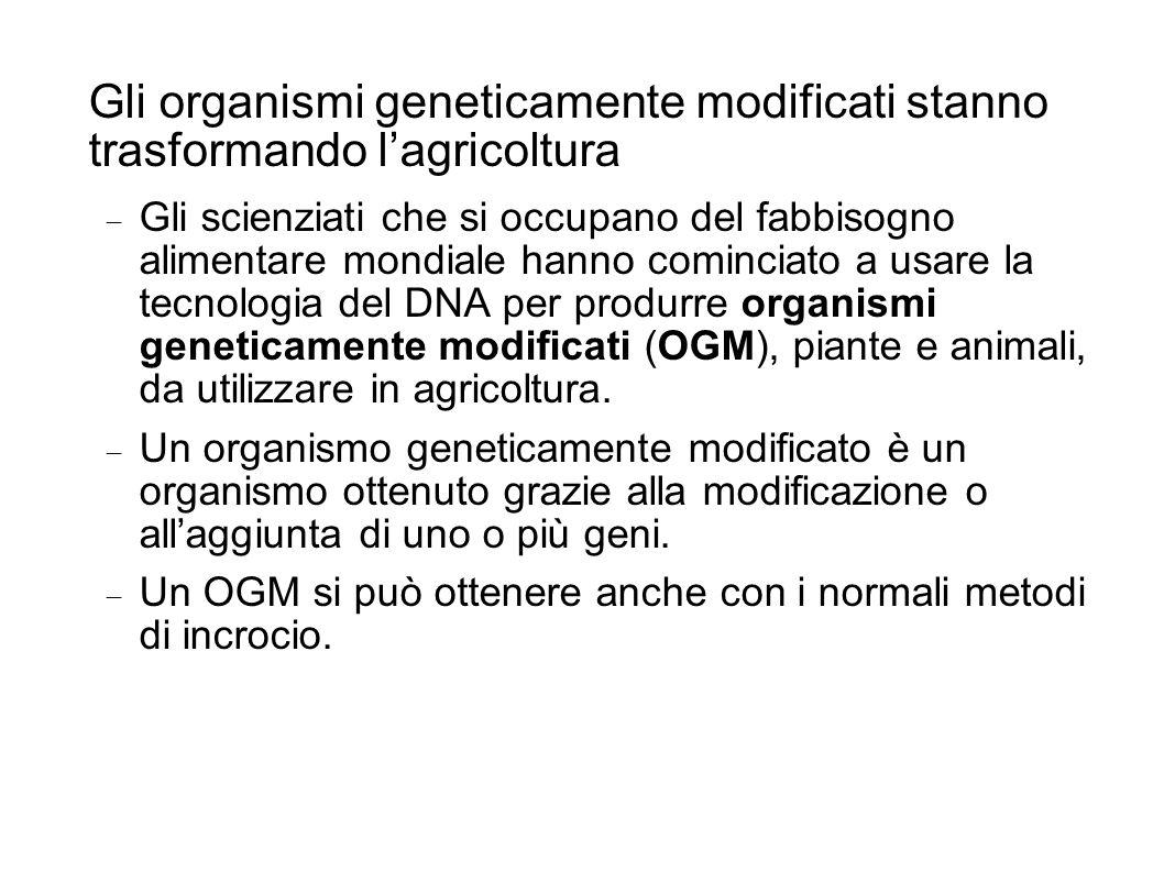 Gli organismi geneticamente modificati stanno trasformando lagricoltura Gli scienziati che si occupano del fabbisogno alimentare mondiale hanno cominciato a usare la tecnologia del DNA per produrre organismi geneticamente modificati (OGM), piante e animali, da utilizzare in agricoltura.