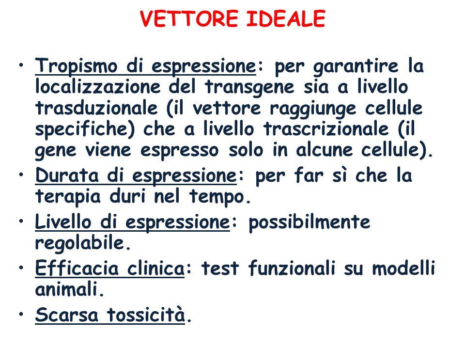 VETTORE IDEALE Tropismo di espressione: per garantire la localizzazione del transgene sia a livello trasduzionale (il vettore raggiunge cellule specif