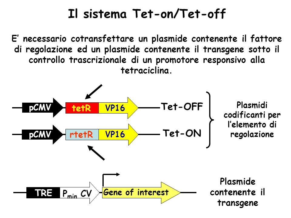 E necessario cotransfettare un plasmide contenente il fattore di regolazione ed un plasmide contenente il transgene sotto il controllo trascrizionale
