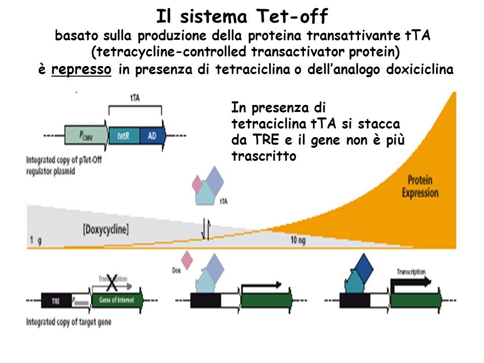 Il sistema Tet-off basato sulla produzione della proteina transattivante tTA (tetracycline-controlled transactivator protein) è represso in presenza d