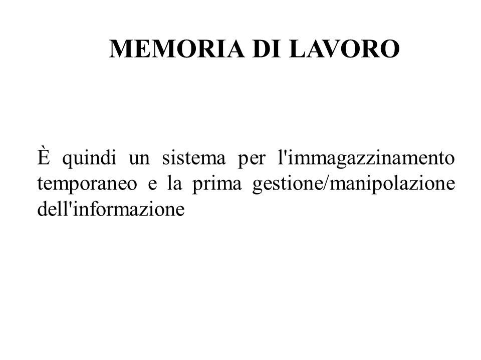 MEMORIA DI LAVORO È quindi un sistema per l immagazzinamento temporaneo e la prima gestione/manipolazione dell informazione