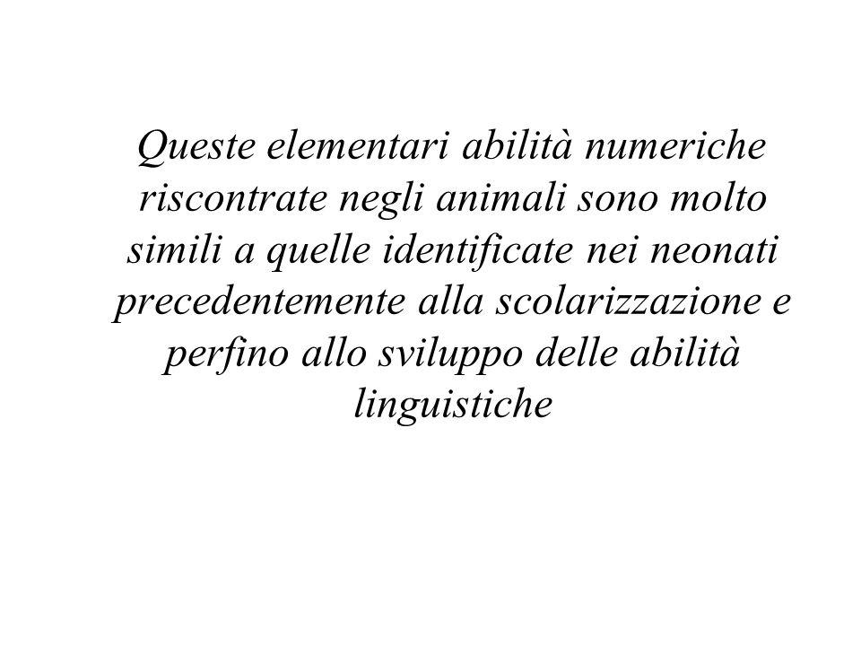Queste elementari abilità numeriche riscontrate negli animali sono molto simili a quelle identificate nei neonati precedentemente alla scolarizzazione