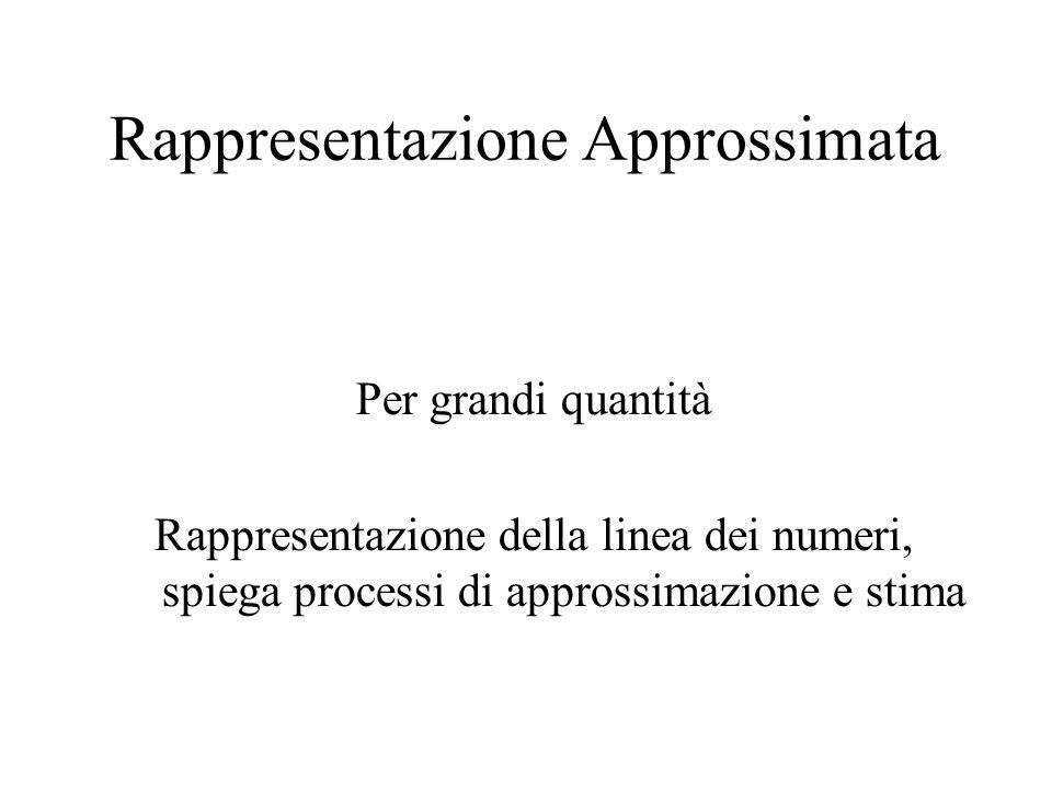 Rappresentazione Approssimata Per grandi quantità Rappresentazione della linea dei numeri, spiega processi di approssimazione e stima