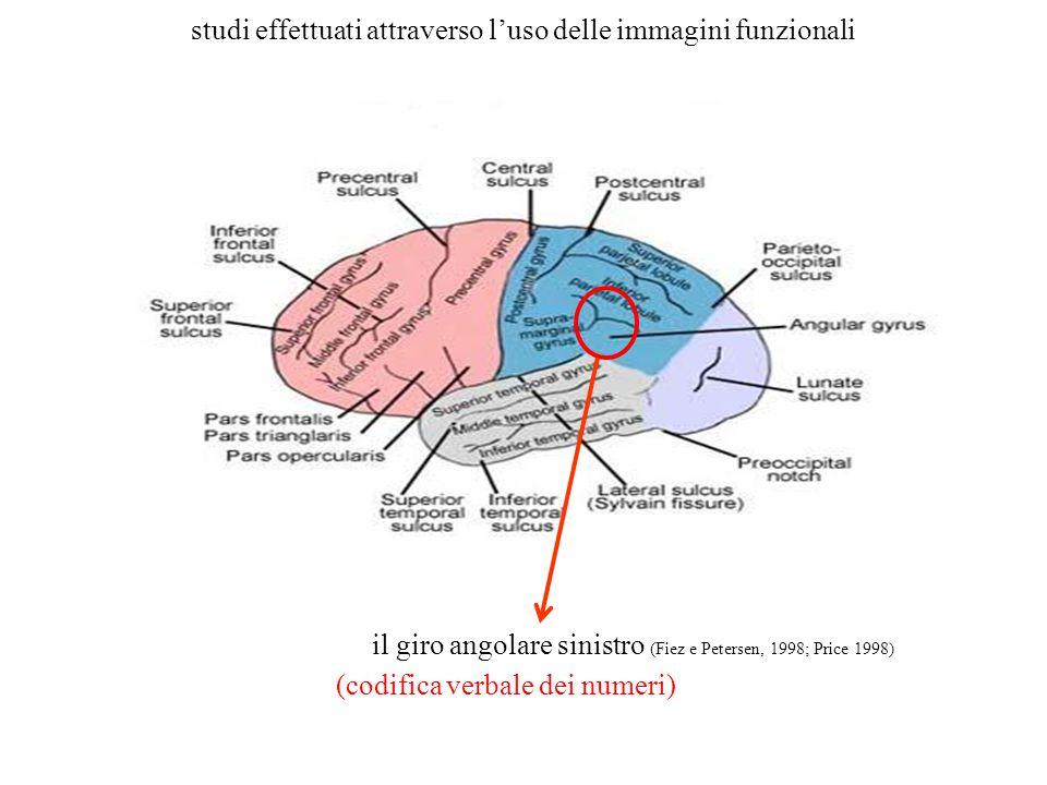 il giro angolare sinistro (Fiez e Petersen, 1998; Price 1998) (codifica verbale dei numeri) studi effettuati attraverso luso delle immagini funzionali