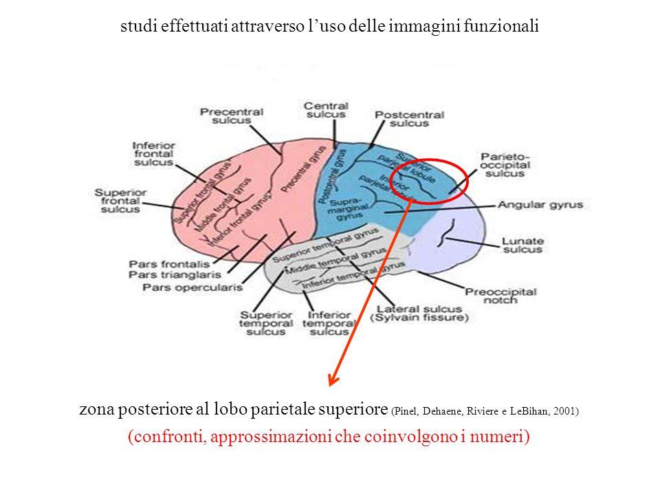 zona posteriore al lobo parietale superiore (Pinel, Dehaene, Riviere e LeBihan, 2001) (confronti, approssimazioni che coinvolgono i numeri) studi effe