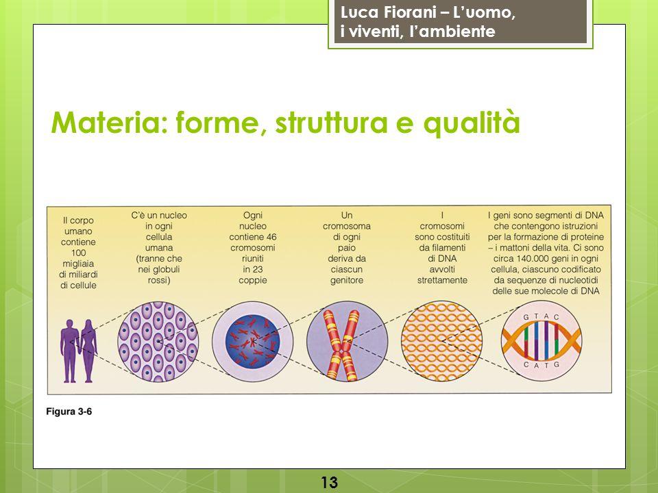 Luca Fiorani – Luomo, i viventi, lambiente Materia: forme, struttura e qualità 13