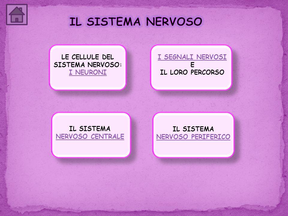 LE CELLULE DEL SISTEMA NERVOSO: I NEURONI I NEURONI IL SISTEMA NERVOSO CENTRALE IL SISTEMA NERVOSO PERIFERICO I SEGNALI NERVOSI I SEGNALI NERVOSI E IL
