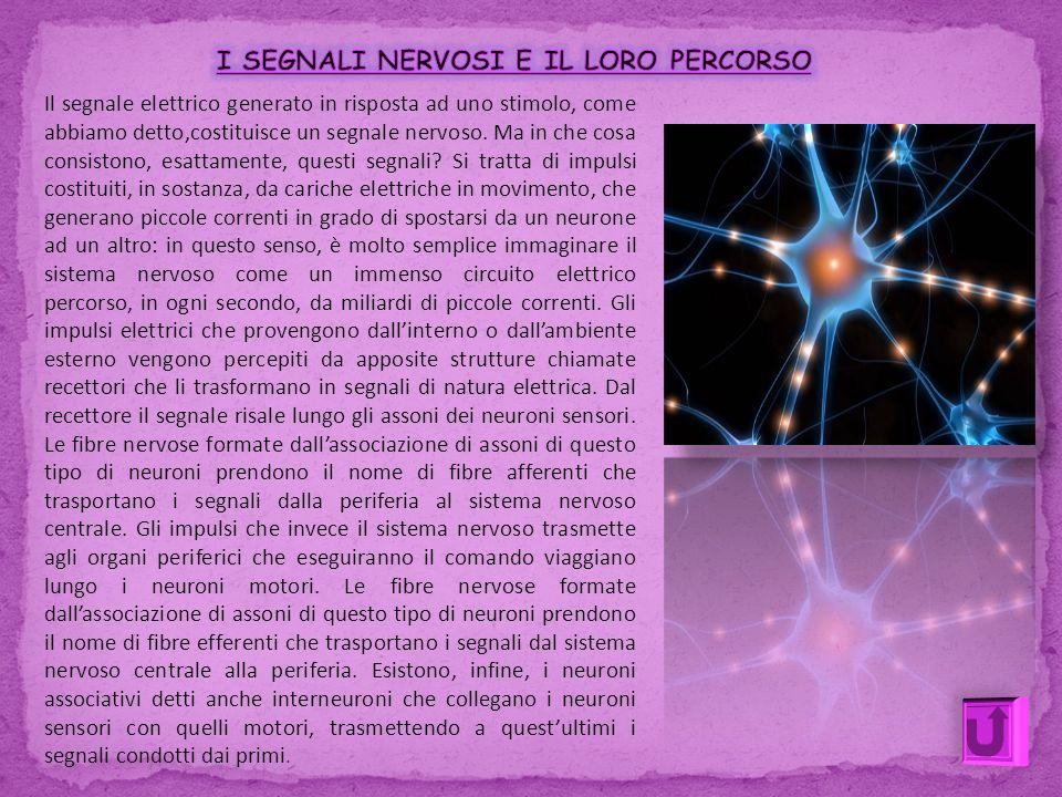 Il segnale elettrico generato in risposta ad uno stimolo, come abbiamo detto,costituisce un segnale nervoso. Ma in che cosa consistono, esattamente, q