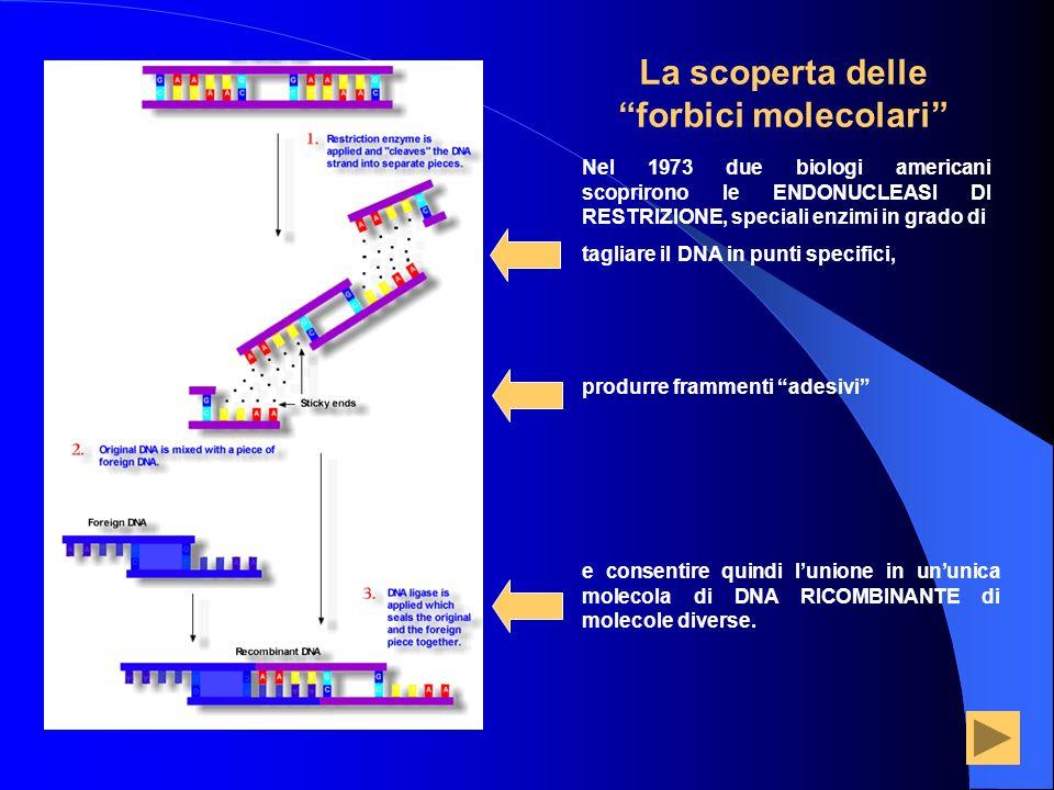 Nel 1973 due biologi americani scoprirono le ENDONUCLEASI DI RESTRIZIONE, speciali enzimi in grado di tagliare il DNA in punti specifici, La scoperta
