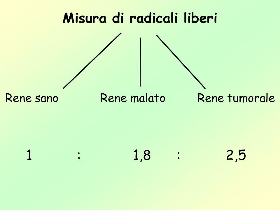 Misura di radicali liberi Rene sanoRene tumoraleRene malato 1:1,8:2,5