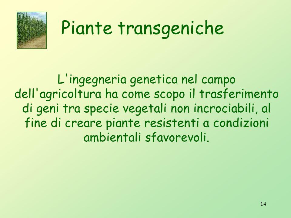 Tappe principali che hanno condotto allo sviluppo delle biotecnologie vegetali: 3 coltura di cellule in vitro e rigenerazione di piante da espianti mu