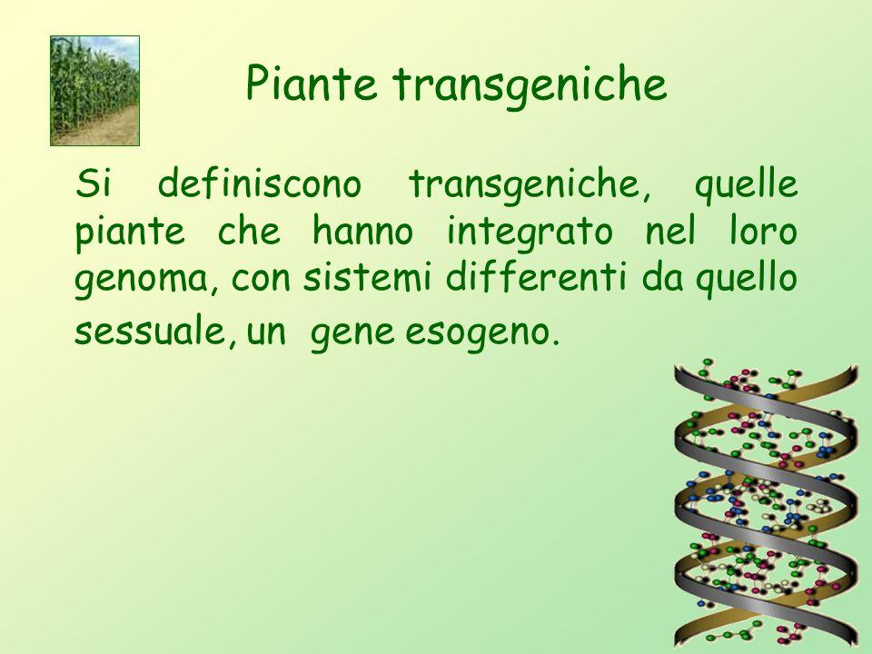 14 Piante transgeniche L'ingegneria genetica nel campo dell'agricoltura ha come scopo il trasferimento di geni tra specie vegetali non incrociabili, a