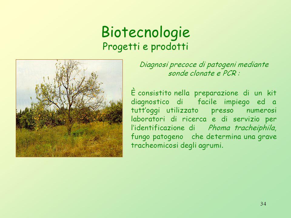 33 Le esperienze fatte nel settore biotecnologico hanno riguardato: