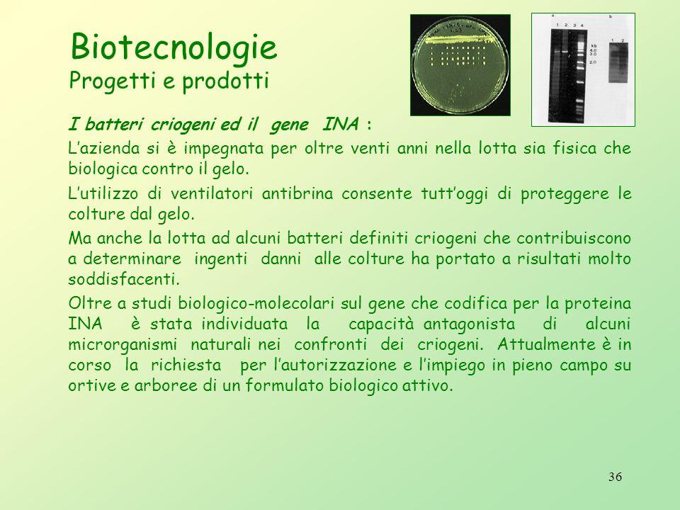 35 Biotecnologie Progetti e prodotti Lelevata sensibilità del test consente di individuare minime concentrazioni (20 pg di DNA) di patogeno anche in m