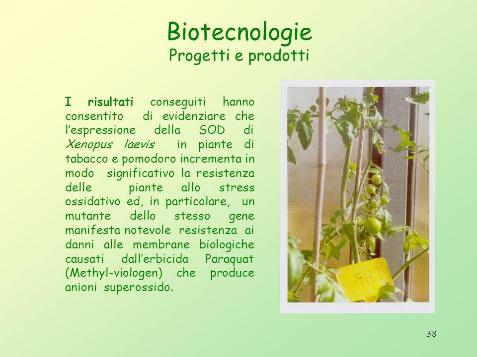37 Biotecnologie Progetti e prodotti Preparazione di piante transgeniche che resistono agli stress ossidativi: Queste piante sono state ingegnerizzate