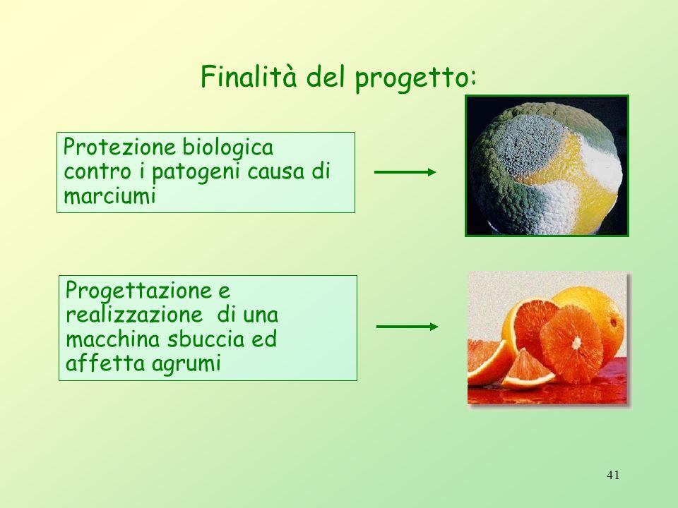40 Biotecnologie Progetti e prodotti Conservazione biologica e preparazione di segmenti e frutti interi di agrumi per il consumo fresco