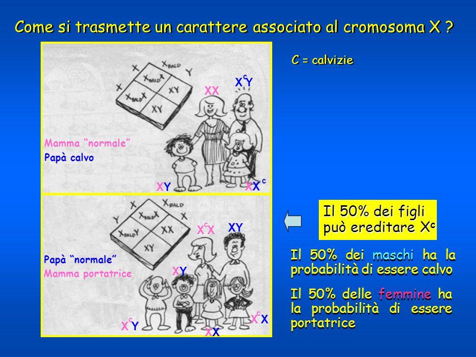 Come si trasmette un carattere associato al cromosoma X ? C = calvizie Il 50% dei figli può ereditare X c Il 50% dei figli può ereditare X c XX X Y X