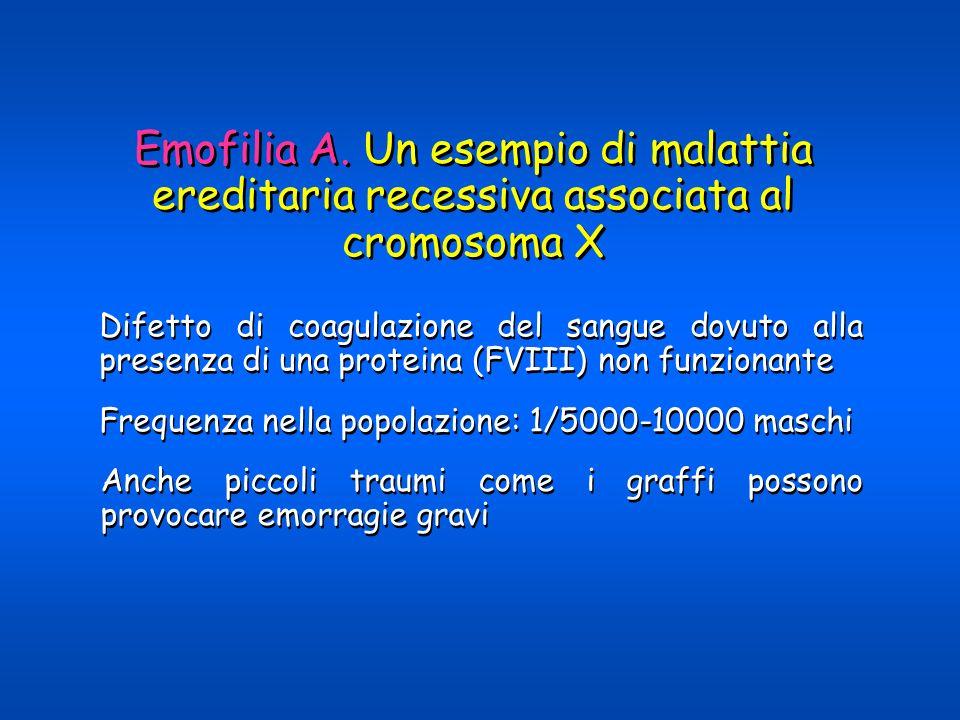 Emofilia A. Un esempio di malattia ereditaria recessiva associata al cromosoma X Difetto di coagulazione del sangue dovuto alla presenza di una protei