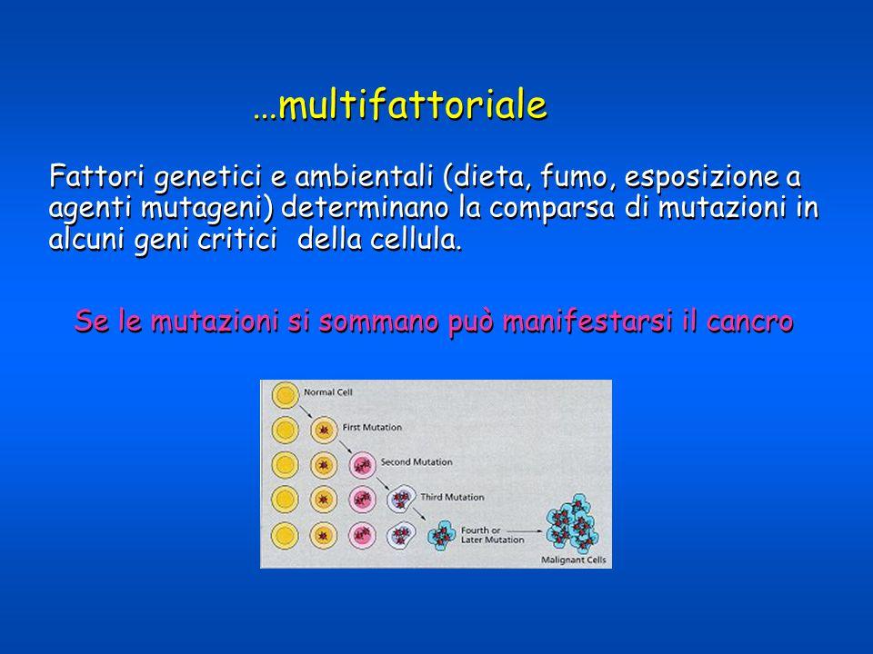 Fattori genetici e ambientali (dieta, fumo, esposizione a agenti mutageni) determinano la comparsa di mutazioni in alcuni geni critici della cellula.
