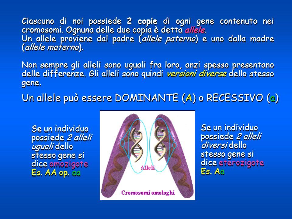 Se un individuo possiede 2 alleli uguali dello stesso gene si dice omozigote Es. AA op. aa Se un individuo possiede 2 alleli uguali dello stesso gene