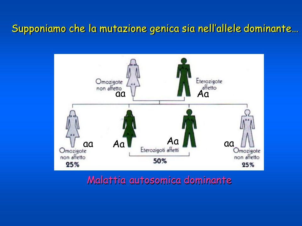 Supponiamo che la mutazione genica sia nellallele dominante… Malattia autosomica dominante aA aA aa aA
