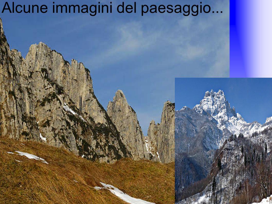 Alcune immagini del paesaggio...