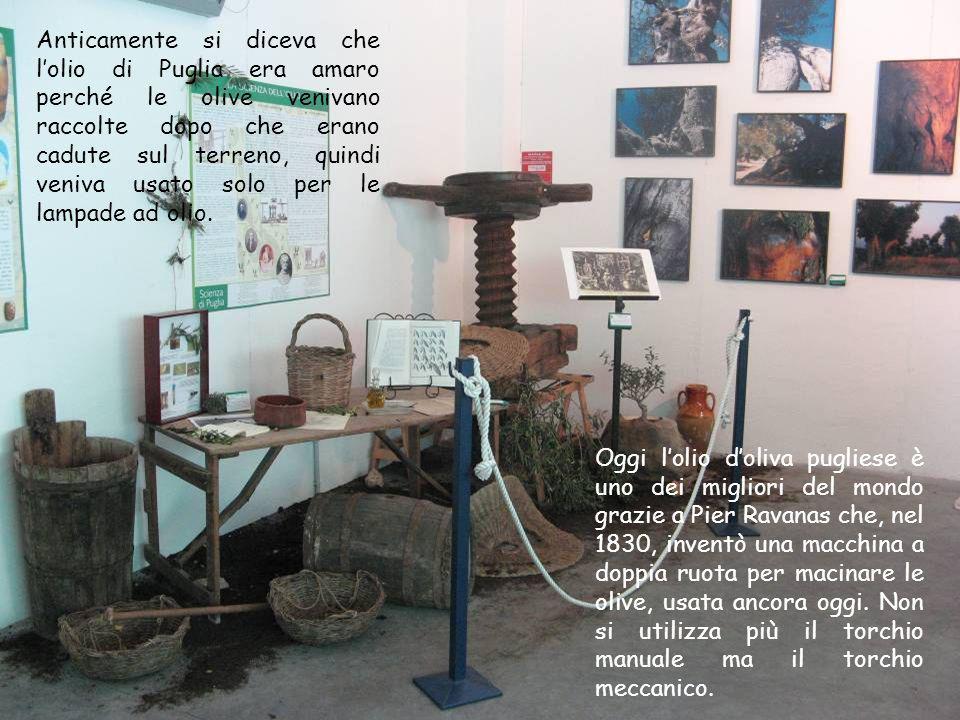Anticamente si diceva che lolio di Puglia era amaro perché le olive venivano raccolte dopo che erano cadute sul terreno, quindi veniva usato solo per