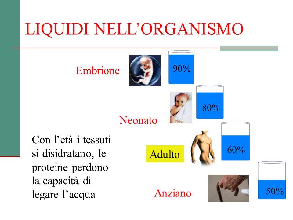 LIQUIDI NELLORGANISMO Con letà i tessuti si disidratano, le proteine perdono la capacità di legare lacqua Anziano 50% Adulto 60% Neonato 80% Embrione