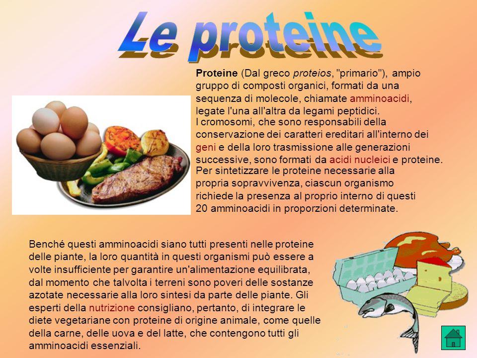 Proteine (Dal greco proteios, primario ), ampio gruppo di composti organici, formati da una sequenza di molecole, chiamate amminoacidi, legate l una all altra da legami peptidici.