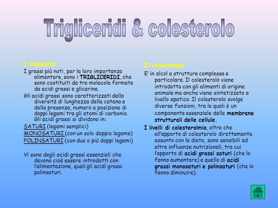 I trigliceridi I grassi più noti, per la loro importanza alimentare, sono i TRIGLICERIDI, che sono costituiti da tre molecole formate da acidi grassi e glicerina.