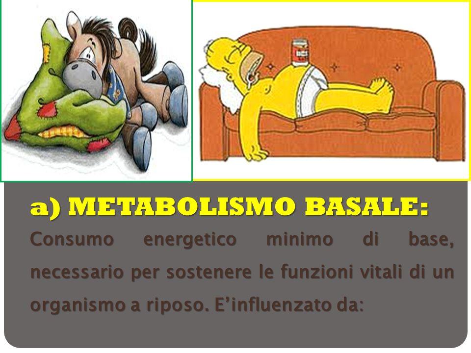 a) METABOLISMO BASALE: Consumo energetico minimo di base, necessario per sostenere le funzioni vitali di un organismo a riposo. Einfluenzato da: