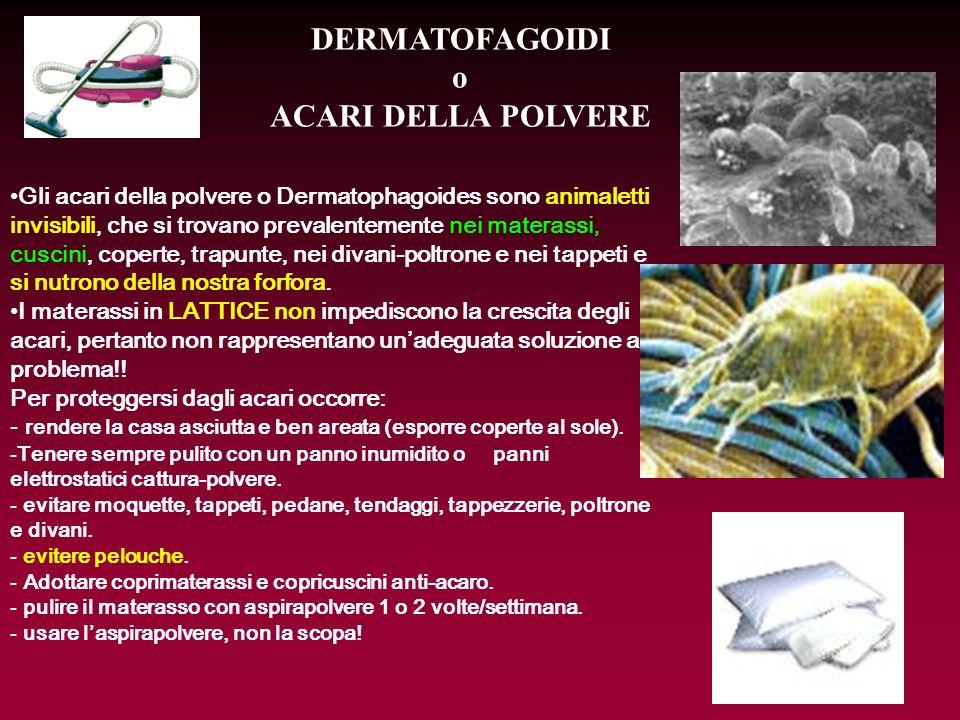 DERMATOFAGOIDI o ACARI DELLA POLVERE Gli acari della polvere o Dermatophagoides sono animaletti invisibili, che si trovano prevalentemente nei materas