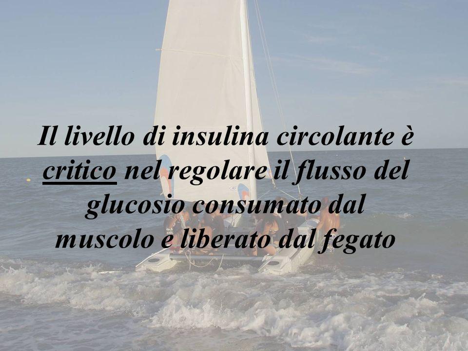 Il livello di insulina circolante è critico nel regolare il flusso del glucosio consumato dal muscolo e liberato dal fegato
